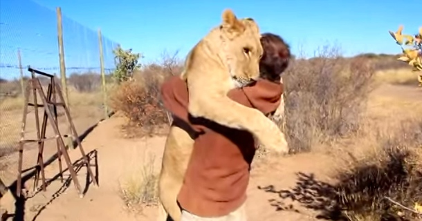 This Lion Did Something Unbelievable When She's Freed From Her Cage